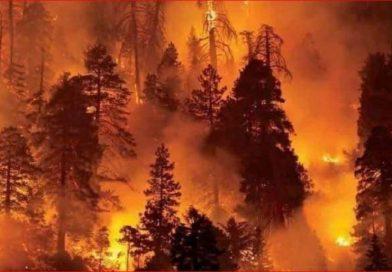 EE.UU.: Quince muertos y cientos de miles de evacuados por los fuegos